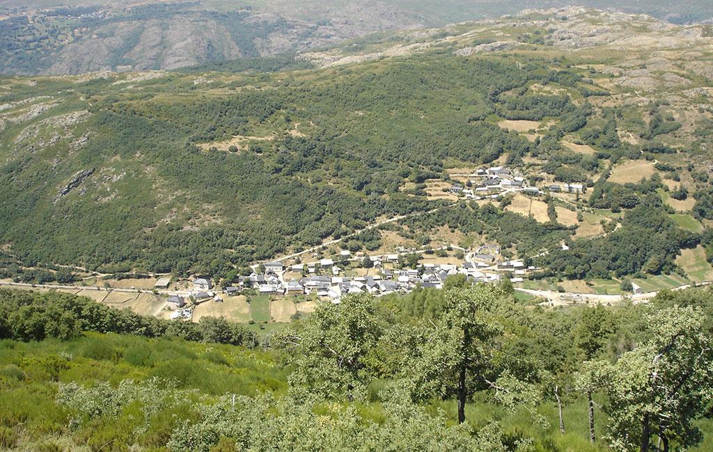 Perros del Alta Sanabria